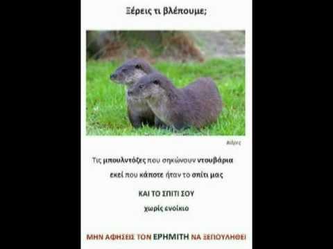 Ερημίτης: Μήνυμα από LUTRA LUTRA προς ΤΑΙΠΕΔ