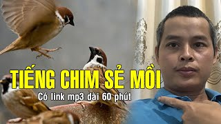 Tiếng chim sẻ chuẩn thu hút chim dài 60 phút (có link mp3)