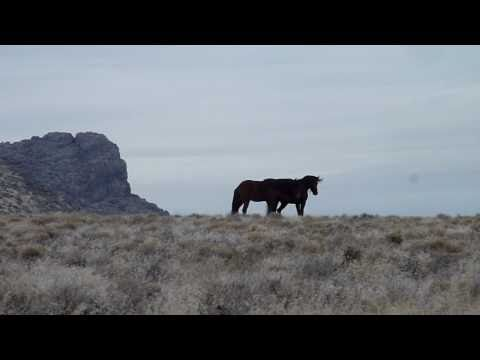 Owyhee Canyon, Hardtrigger Horses Video