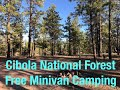 Cibola National Forest Free Minivan Camping & Forgetting to Eat Lunch! WHAT?!?! Solo Travel Fun.