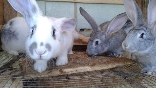Cute baby bunnies – funny rabbits 3 weeks old