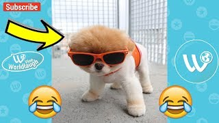 Try Not To Laugh Or Grin While Watching Animals & Pets Videos Compilation - Vine Worldlaugh