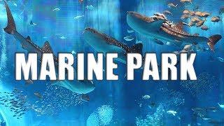 Marine Park Singapore Biggest Aquarium Beautiful Fishes