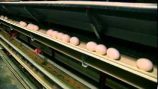 Herbruck's Poultry Ranch: Egg Farm Hen House