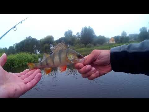 видео за лещом на мелководье