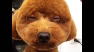 犬のヘアカットトリミング。可愛い奇抜スタイル♪