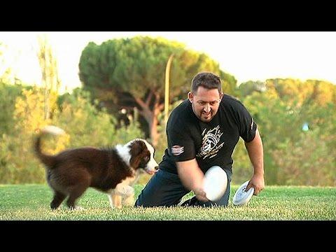 Disco Dog, un deporte para perros y amos