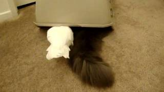 Cats and Parrot playing with box Part 2
