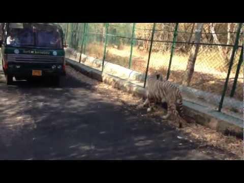 sivaram in Bannerghatta wild life safari trip 1