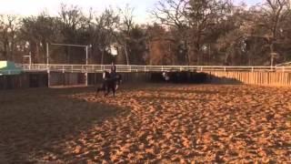 TigerLily- Jared Lesh Cowhorses