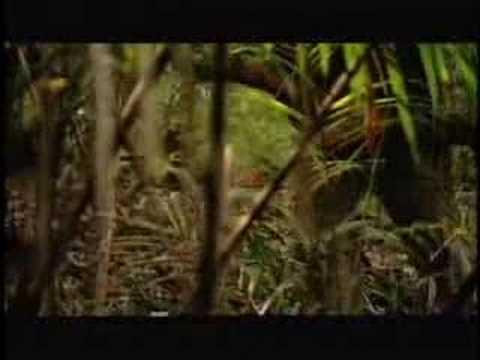 Survival zone jungle