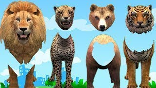 Animals Wrong Heads 3D Animation Cartoons For Kids    Wild Animals Finger Family Nursery R