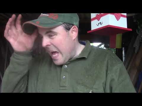 Tomaten Pflanzen mit Mulchversuch (Altes Video 2017)