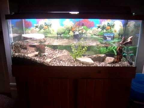 75 gal turtle tank