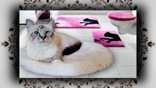 DIY 😻 Kuschel Bett für Katzen in 2 Min  | Easy Homemade Cat Bed
