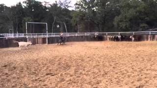 Sport- Jared Lesh cowhorses