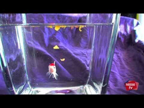 La nutrición para peces de agua fría y peces tropicales - Consejos Purina para tu mascota