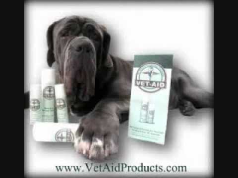 Canine Chin Acne / Skin Disorders in Dogs: Mastiffs, Rottweilers, Bull Dogs, Boxers