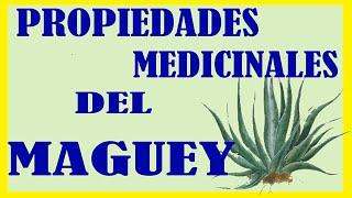 Propiedades Medicinales del Maguey