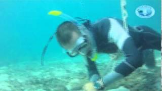 Freedive Course Poseidon Dive Center Download