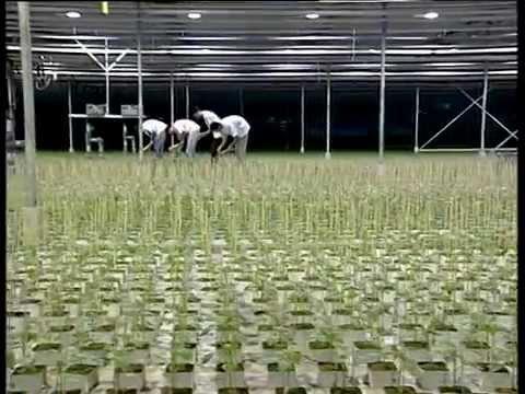 The DKG Group presents GRODAN hydroponics (Υδροπονία)