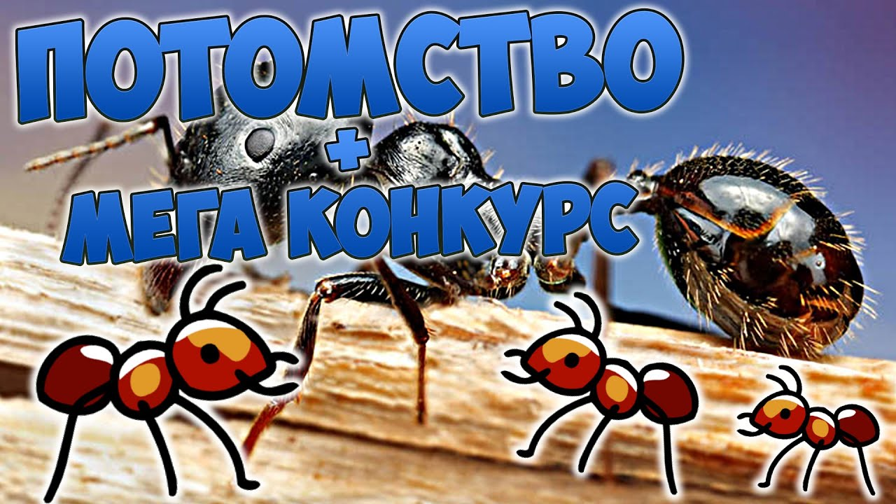 ДОМАШНИЕ МУРАВЬИ СЪЕЛИ КОМАРА | Жизнь и уход за муравьями