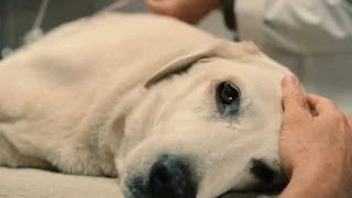 download lagu Top 10 Saddest Animal Deaths In Movies gratis