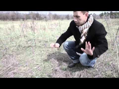 Воскресение, Константин Никольский - Четыре дерева