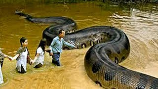 Top 10 BIGGEST Animals In The World