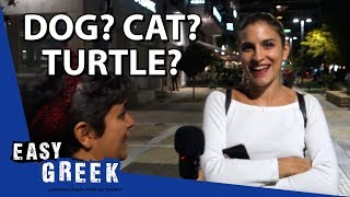 Dog, cat or turtle? Greeks and their pets | Easy Greek 47