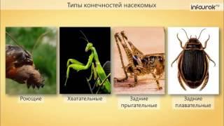 анатомия и физиология насекомых бизнес-план