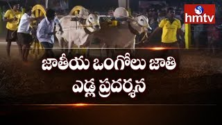 Bulls Competition In Kesarapalli | Ongole Jathi Edla Pradarshana | Krishna District | hmtv
