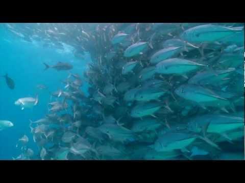 Underwater Fish Tornado