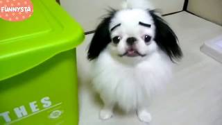 Funny Dogs with Eyebrows