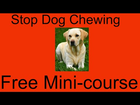 Good Diet For Dogs With Diabetes Stop Dog Chewing Garden Furniture