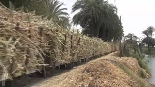 Egyptian Sugar Cane Railway