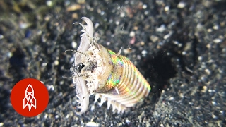 Beware the Bobbit Worm!