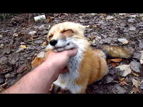 Fox go FLOOF