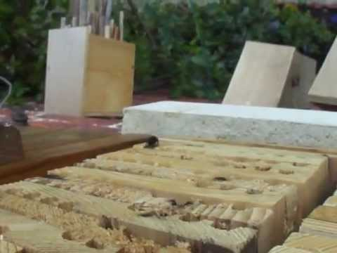 Mason bee activity review - April 2012