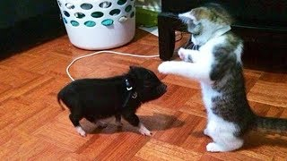 Funny Cat Videos Compilation 2018 - TRY NOT TO LAUGH or GRIN