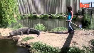 Girl Vs Alligator