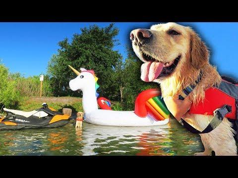 DOG RIDES GIANT UNICORN FLOAT TO PRIVATE ISLAND