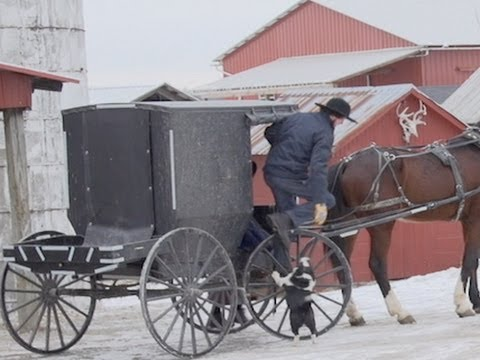 Amish vs. the Courts: Family Speaks Out on Fleeing the U.S. to Escape Court-Mandated Chemo