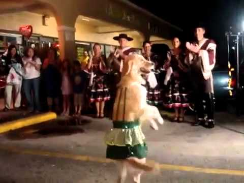 Merengue Dancing Dog Owns the Dance Floor
