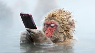 8 of the Craziest Facts about Snow Monkeys!