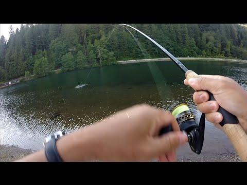 powerbait setup for trout