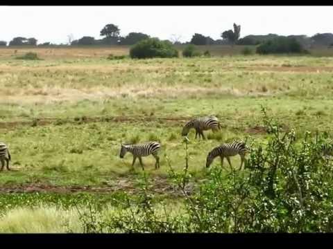 Il video di mio Fratello del Viaggio in Kenia 5-13 Febbraio 2012