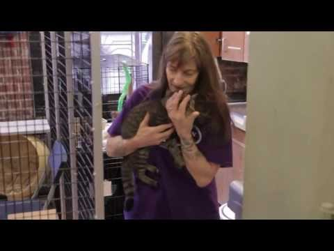 what-is-an-animal-shelter.html