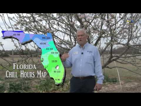 Master Gardener Program,  Selecting the Right Apple Tree for Northwest Florida's Climate