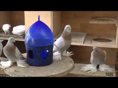 Как сделать гнездо для голубей из гипса